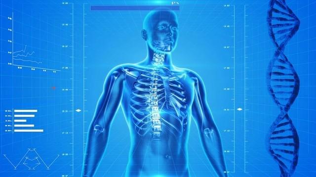 Az emberi testben hol találhatóak a legkisebb csontok?