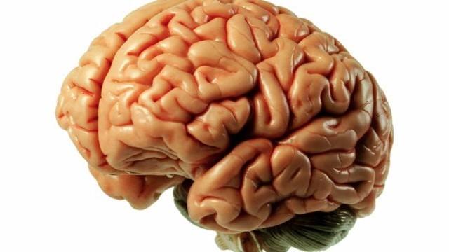 Mi helyezkedik el az agytörzs mögött?