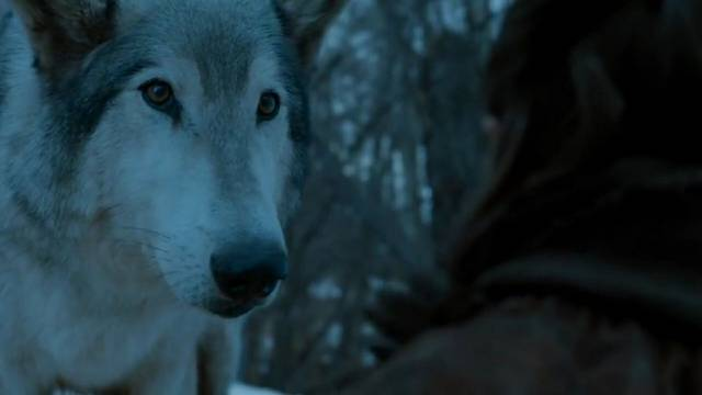 Hogy hívják Arya Stark farkasát?