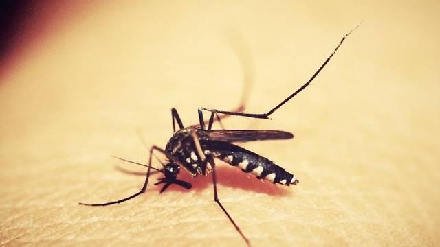 Melyik szúnyog szív vért?