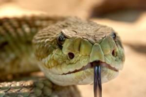 A csúszó-mászóktól (kígyók, gyíkok, bogarak)