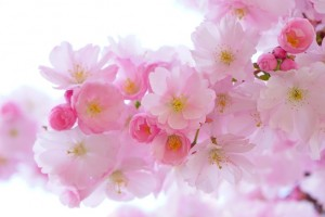 A tavasz