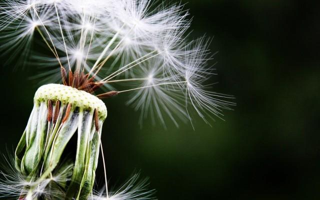 Szenvedsz-e az allergiától?