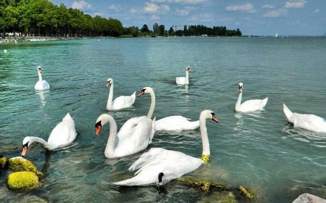 Balatonberény: A Balaton északi vagy a déli partján van?
