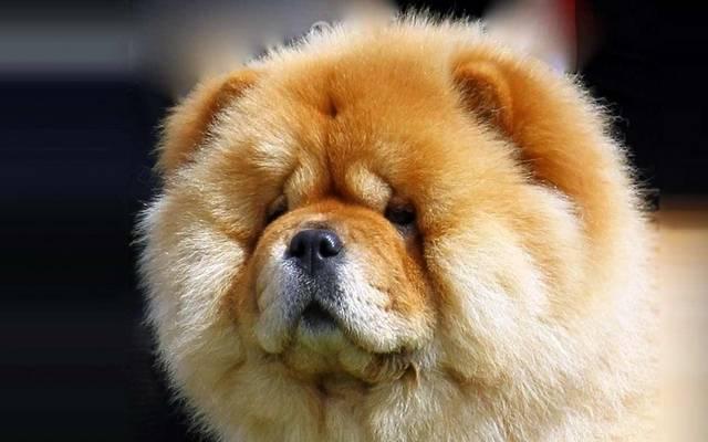 Milyen fajta kutya?