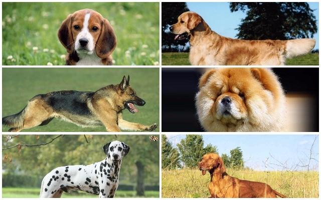 Felismered ezeket a kutyákat?