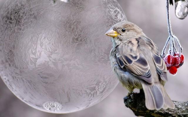 Hangolódj az év végére ezekkel a decemberrel kapcsolatos kvízkérdésekkel