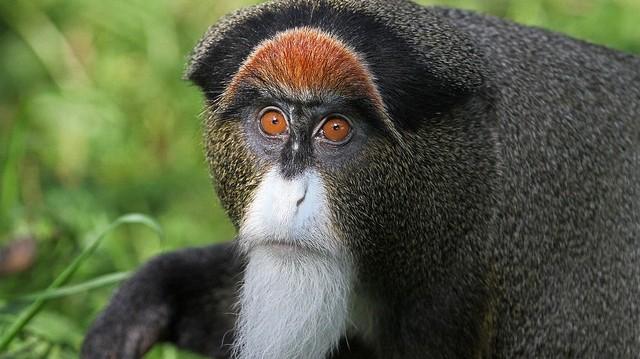 Igen, ilyen cuki a drága! Afrikai majomféle.
