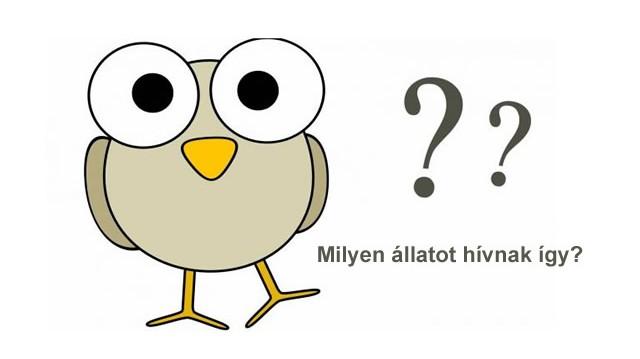 Milyen állat a füleskuvik?