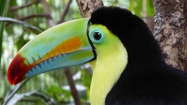 Hol található Costa Rica?