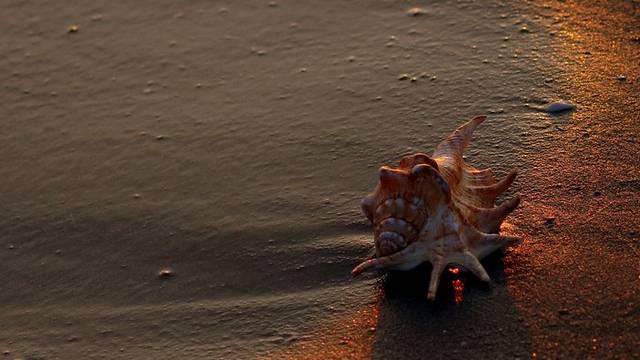 Milyen életmódot folytatnak a kagylók?