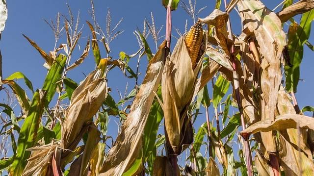 Milyenek azok a növények, amelyek esetében a csírázástól a magképzésig tartó folyamat egy éven belül történik meg?
