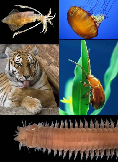 Ki alkotta meg a máig is elfogadott állatok rendszertanát?
