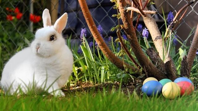Minek a szimbóluma a húsvéti tojás és a nyúl?
