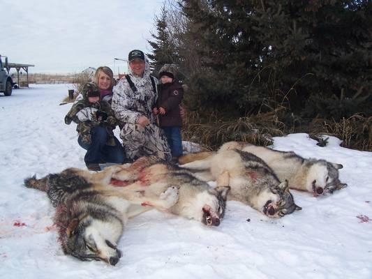 A legjobb barátodnál vagy és azt látod, hogy több farkast is megölt/megöltek a szülei. Mit teszel?