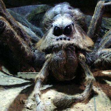 A pókoktól.