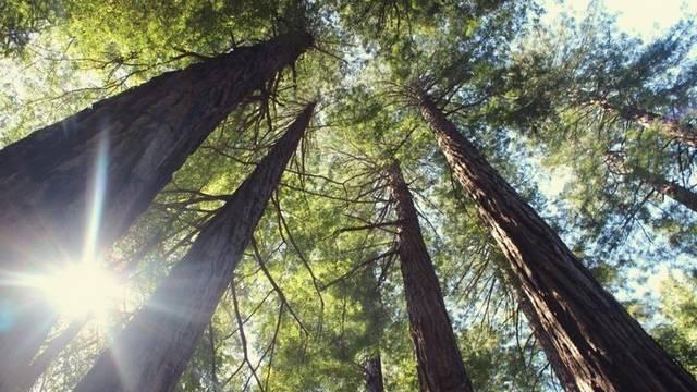 Melyik fa nem lombhullató?