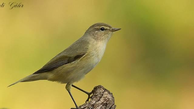 Milyen madár ez?