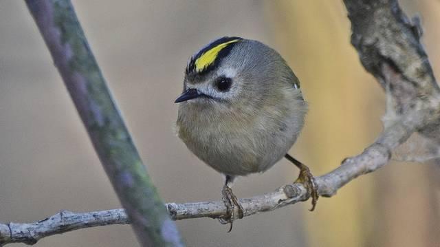 Milyen madár ez ?
