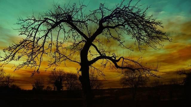 ..., mint egy darab fa.