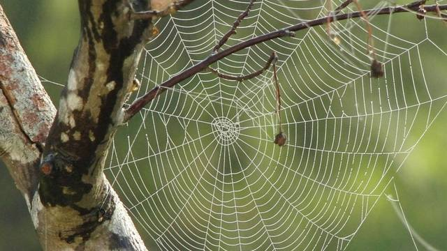 Hány szeme van majdnem minden póknak?