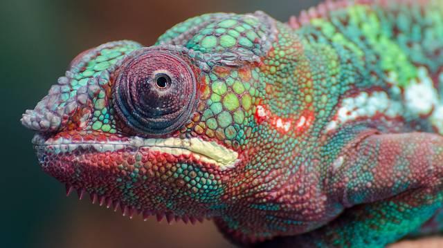Mi igaz a kaméleon szemére, ami különlegessé teszi az állatot ebből a szempontból is?