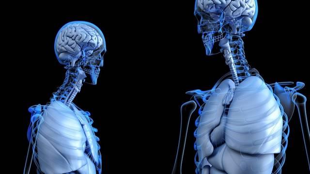 Az ember súlyának nagyjából hány százaléka a csontváza?
