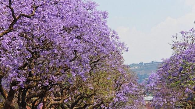 Válaszd ki, a Dél-Afrikai Köztársaság fővárosát!