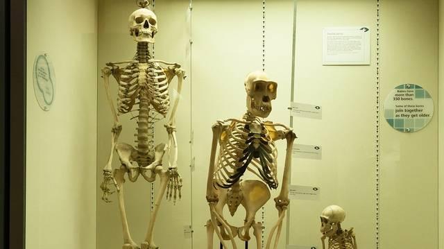 """Hány """"éves"""" a homo sapiens, azaz hány évvel ezelőtt jelent meg?"""