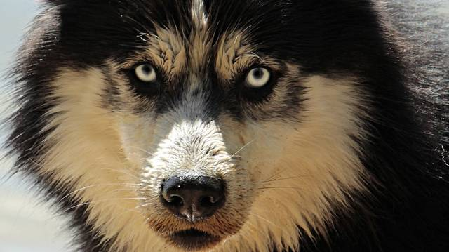 Milyen kutya a címszereplője Jack London egyik könyvének?