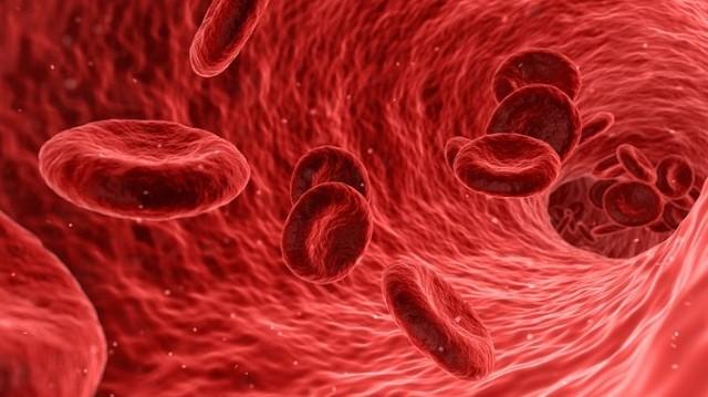 Ezen keresztül érkezik a szív jobb pitvarába a vér.