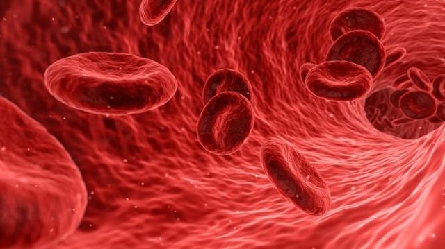 Így hívják a szívből a különböző szervek felé vezető rugalmas falú eret