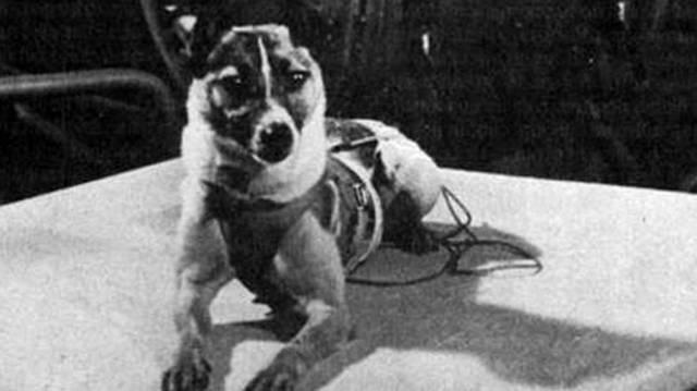 Miről nevezetes Lajka kutya?
