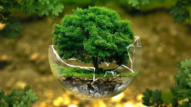 Minek hatására termelődik a növényekben a klorofill?