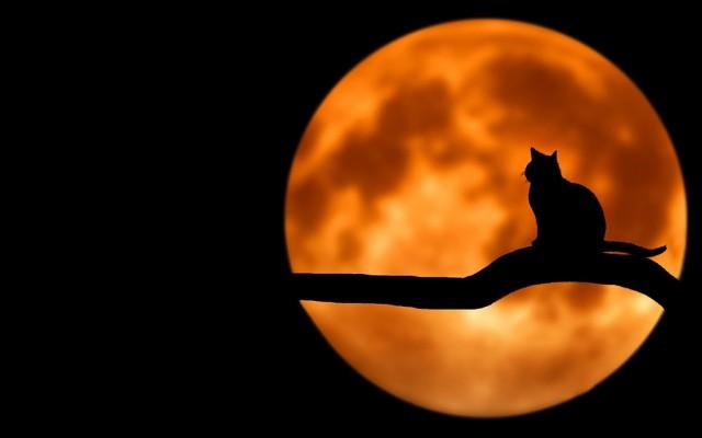 2020 a Hold éve, ez pedig egy kvíz, amelynek minden kérdése a Holddal kapcsolatos (1.)