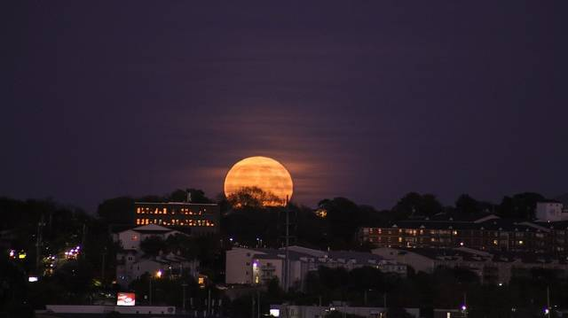 Ki volt az az énekesnő, aki Mike Oldfield dalai közül a Moonlight Shadow címűt is énekelte 1983-ban?