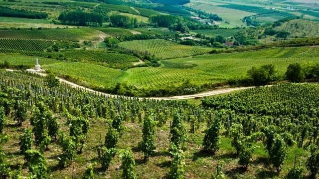 Budapest szőlőskertje