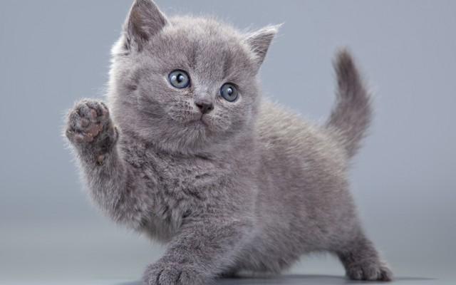 Szereted és ismered az állatokat? Mindjárt kiderül!