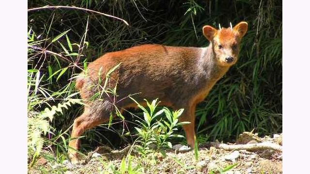 A világ legkisebb szarvasa a déli törpeszarvas, a pudu. Az állat marmagassága 35-45 centiméter, testtömege 6,5-13,5 kg. Hol él?