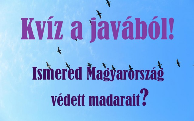 Ismered Magyarország védett madarait? Teszteld magad!