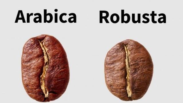 Milyen magasra nőnek a Robusta kávécserjék?