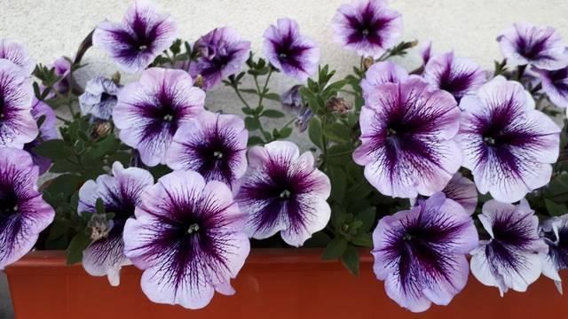 Milyen virág van a képen?