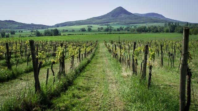 A világ bortermelő országai között hányadik helyen áll Magyarország a terület nagysága alapján?