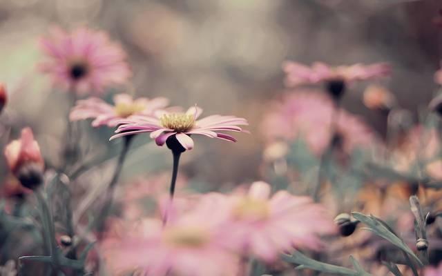 """Kinek a verséből származik az idézet? """"Tavaszom, vígságom téli búra vált; Régi jó világom méltatlanra szállt."""""""