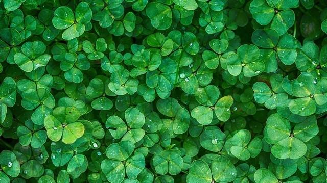 Zöld szín, lóhere, Szent Patrik-nap. Melyik országra gondoltunk?
