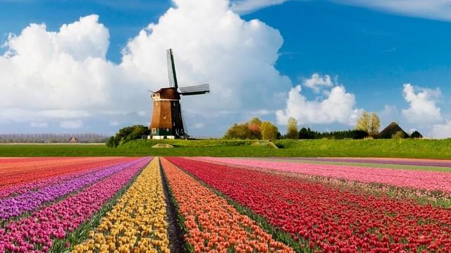 Melyik országban találhatók az alábbi városok: Hága, Rotterdam, Tilburg?
