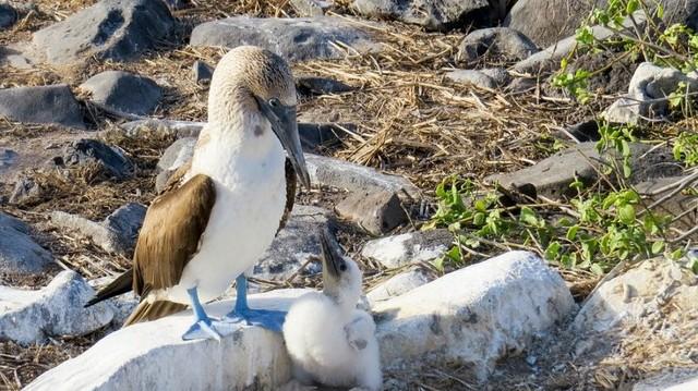 Galápagos-szigetek, mely országhoz tartozik?